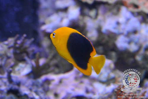 Untitled | by keywest aquarium