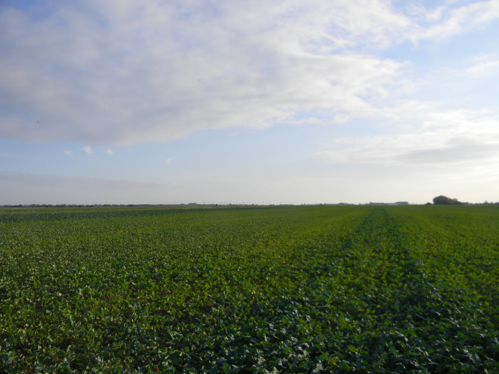 Through the cabbage field to the station. Ham Street to Appledore