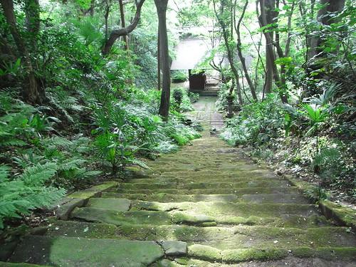 2011/09/23 (金) - 15:20 - 妙法寺 ー 苔の石段