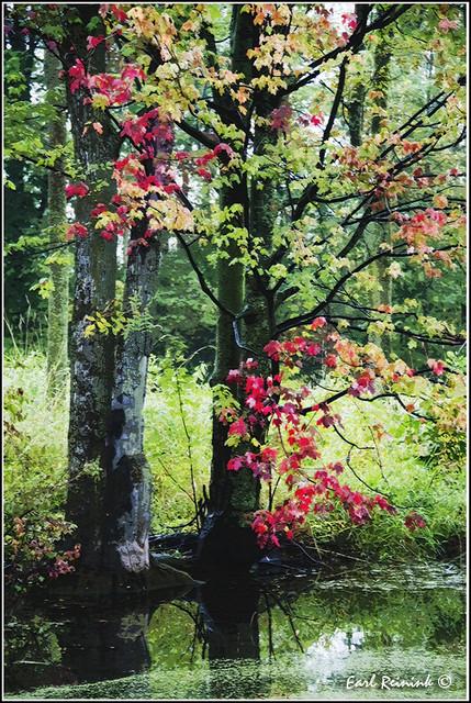 Autumn In Ontario (20110923-0558b)