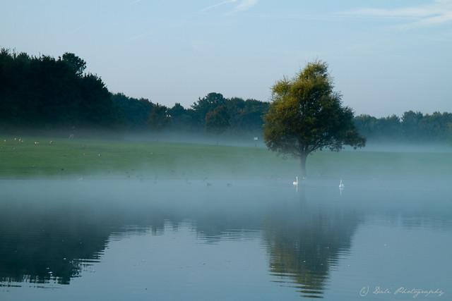 Morgennebel im Ostpark