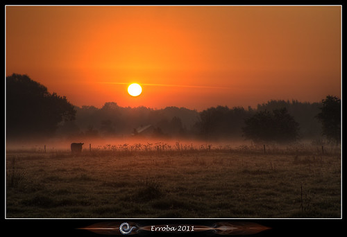 trees orange house mist grass yellow fog sunrise canon cow belgium belgique belgië fields erlend 60d erroba robaye
