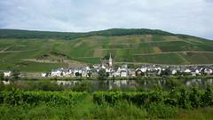 Шикарный вид на виноградники и реку Рейн