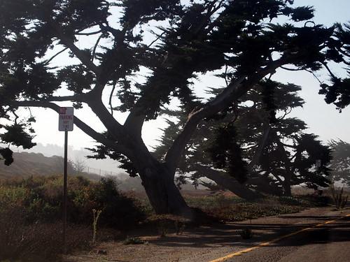 Cedar Still Life: Highway 101, Leucadia CA