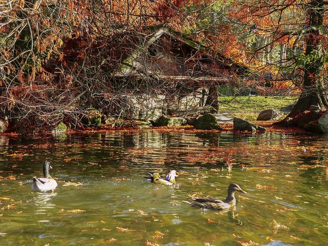 Lake- Parque Castrelos, Vigo