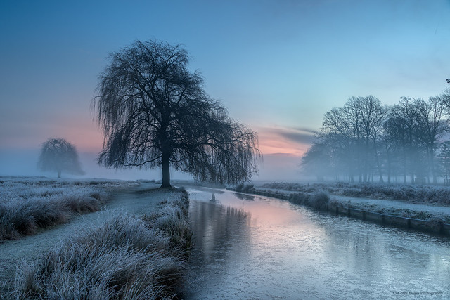 Winter in Bushy Park