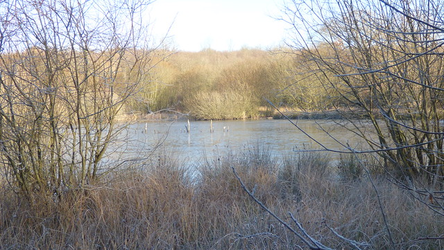 Winter walk on Epsom Common