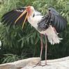 Painted Stork by SivamDesign