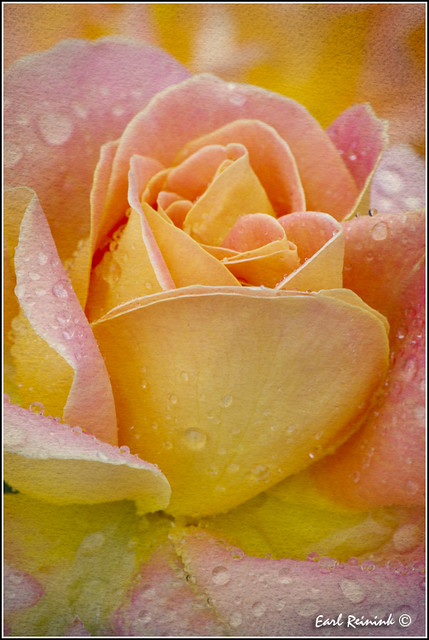 Raindrops and Roses (0110921-0605)