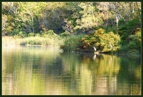 nature texas wildlife pasadena horsepenbayou wanam3