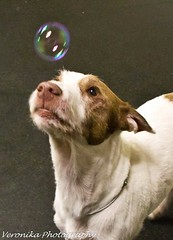 RUSTY playing bubbles
