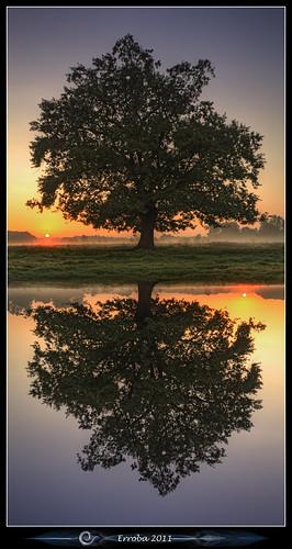 trees orange mist grass yellow fog sunrise canon reflections belgium belgique dream belgië surreal fields unreal erlend mechelen 60d hetbroek erroba robaye