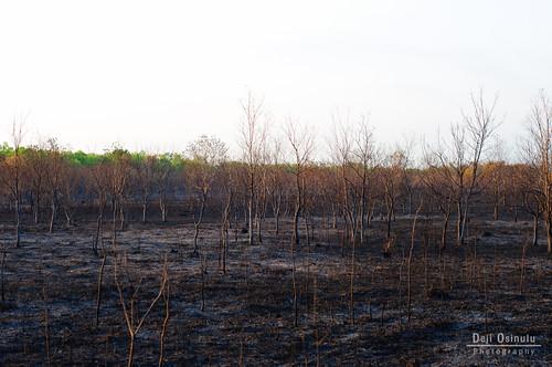 sunrise fire texas drought fires wildfire 9691 georgebushpark barkerreservoirwetlandsrestorationproject 2011texasdrought