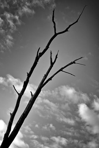 Dead Tree | by Rick Camacho