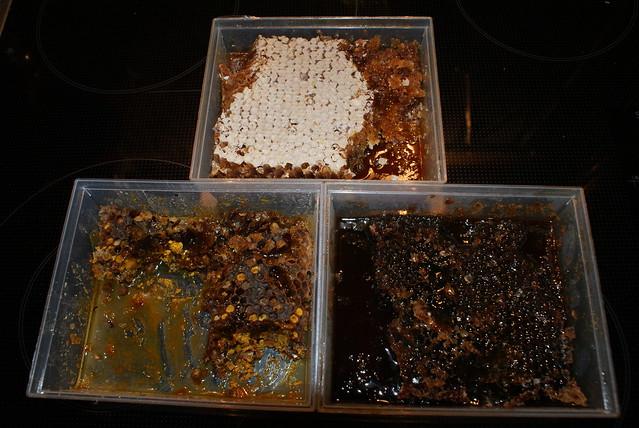 Bienenbrot und Wabenhonig