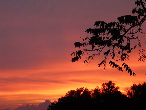 trees sunset silhouette montpelier jamesmadison endoftheday scavchal