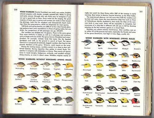 Golden Guide Warblers