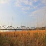 大安溪鐵橋.芒草
