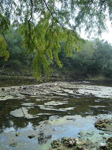 statepark florida northflorida madisonbluesringsstatepark