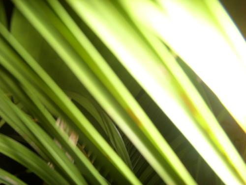 Leaf-Vicky