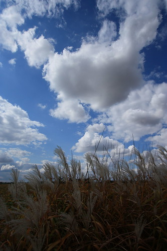 autumn sky sun grass clouds canon xsi
