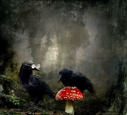 Die Mykologen - Glückspilze - Lucky Fellows - Fungi Experts | by h.koppdelaney