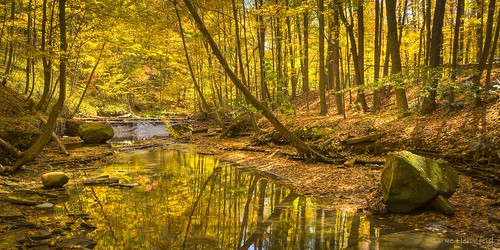 autumn fall leaves creek forest afternoon boulder steam cuyahogavalleynationalpark