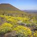 Pinacate Biosphere Reserve