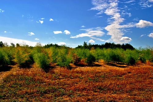 autumn usa fall nature walking midwest hiking michigan diversity delight wetlands marsh simple limelight changingcolors equinox adorned ahorn okemos savoring unadorned midmichigan vanatta amyloid meridianroad lansingmetropolitanarea