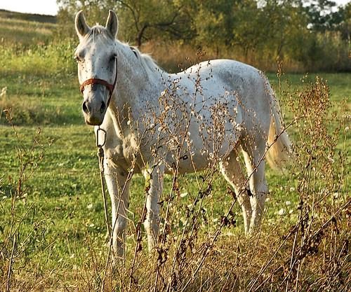 horse nikon transylvania 2011 sunsettime héderfája hidrifaia
