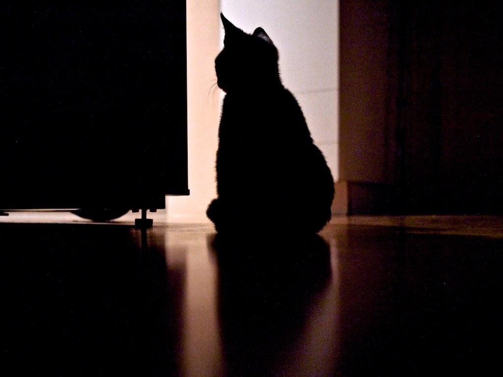 Skeptikatz (Ein Hund kam in die Küche) | Testhase Hekker | Flickr