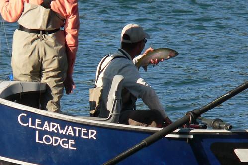 flyfishing sacramentoriver activeassignmentweekly