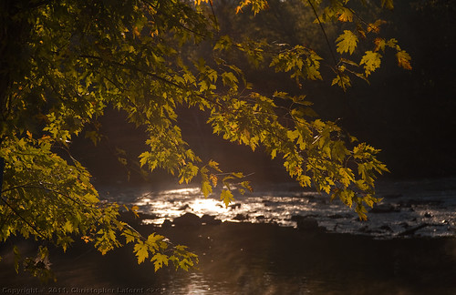 leaves reflections hawriver alamancecounty earlymorninglight nikond700