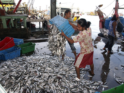 Small-scale fisheries, Kota Kinabalu, Malaysia, photo by Jamie Oliver, 2007 | by WorldFish