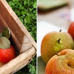 Fruitig Hageland