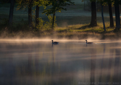 mist morning lake water lakebenson sunrise geese garner nc