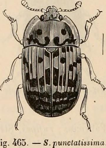 """Image from page 369 of """"Encyclopédie d'histoire naturelle; ou, traité complet de cette science d'après les travaux des naturalistes les plus éminents de tous les pays et de toutes les époques: Buffon, Daubenton, Lacépède, G. Cuvier, F. Cuvier, Geoffroy Sa"""