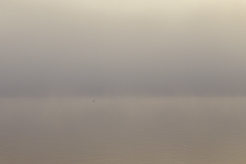 sea naturaleza mist seascape bird mañana norway fog sunrise relax duck still swan haze no tranquility natura calm 雾 nebula neblina 自然 niebla dis mane tønsberg tåke tiempo caligo vestfold lessismore 朝 曇り 霧 早上 气象 calmwaters tempestas 天候 性质 霾 nebulaaperuissetdiem الضباب،ضباب،الضباب،والطقس،والط الضباب،ضباب،الضباب،والطقس،والطبيعة،صباحاليوم