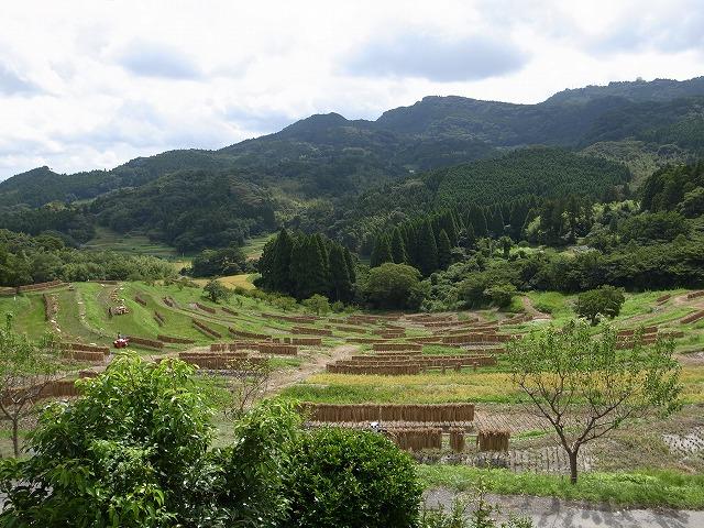 <p>a)棚田で稲刈り</p>
