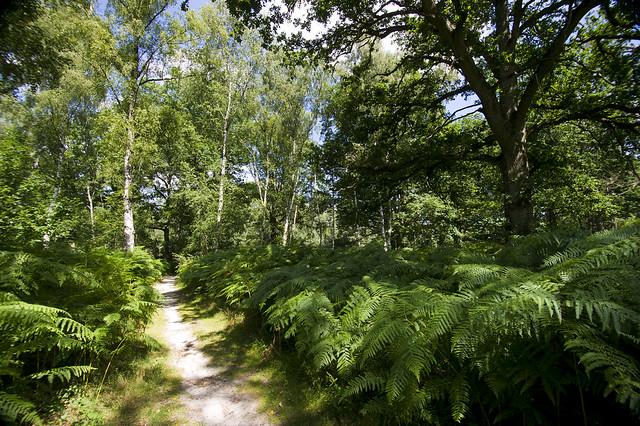 Espaces naturels sensibles à Rochefort