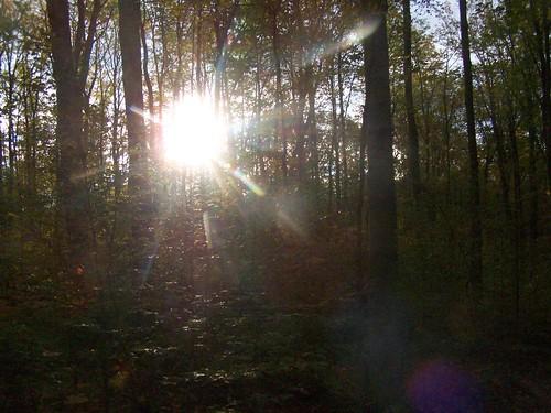 trees sunrise labrador hollow thru andyarthur