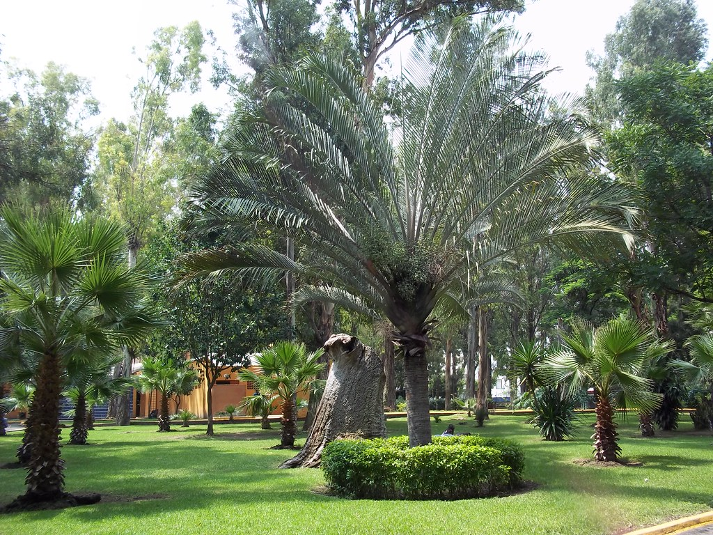 Trip to Guadalajara: 6 Places to Walk and Relax