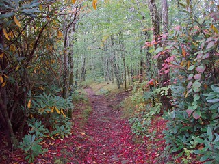 A Hint of Autumn, Great Smoky Mountains National Park, Tennessee | by netbros