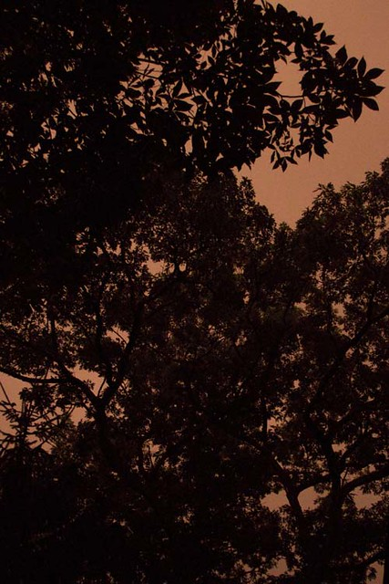 Storm at Dawn 7