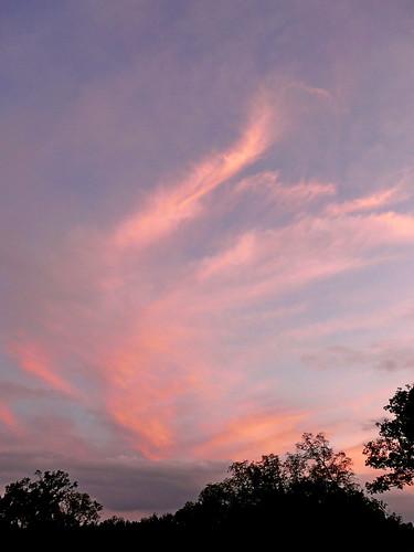 trees sunset sky silhouette clouds virginia montpelier jamesmadison endofday arlingtonhouse scavchal