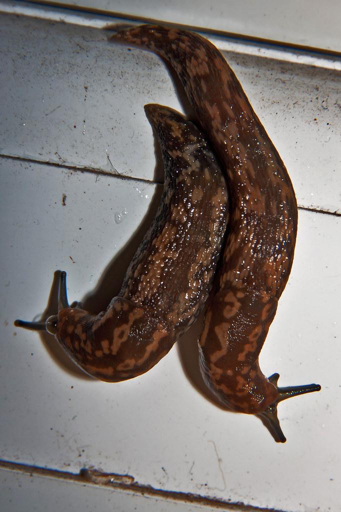 Synchronised Slugs