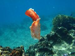 di, 19/07/2011 - 00:40 - 165. Tonga onderwater