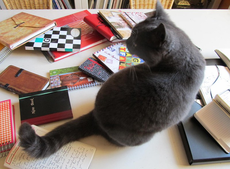 notebook-cat