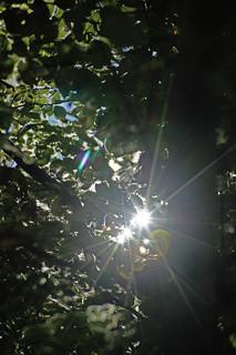 Viele Sonnen