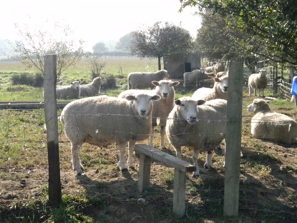Ewe weren't thinking of coming this way were ewe? Just try. Ham Street to Appledore